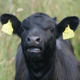 Uw eigen veehouderij